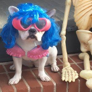 Katy Perry dog costume